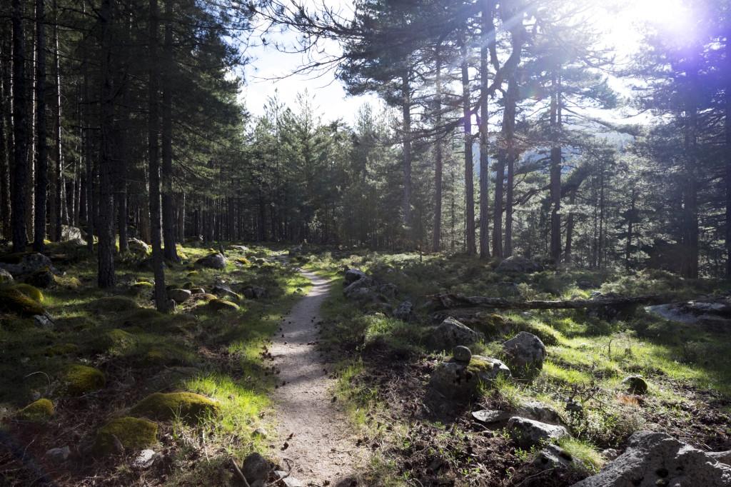 Lichtdurchflutetes Waldstüc