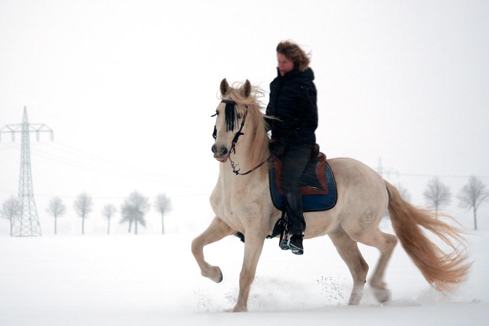 Reiterin auf Andalusier im Schnee.