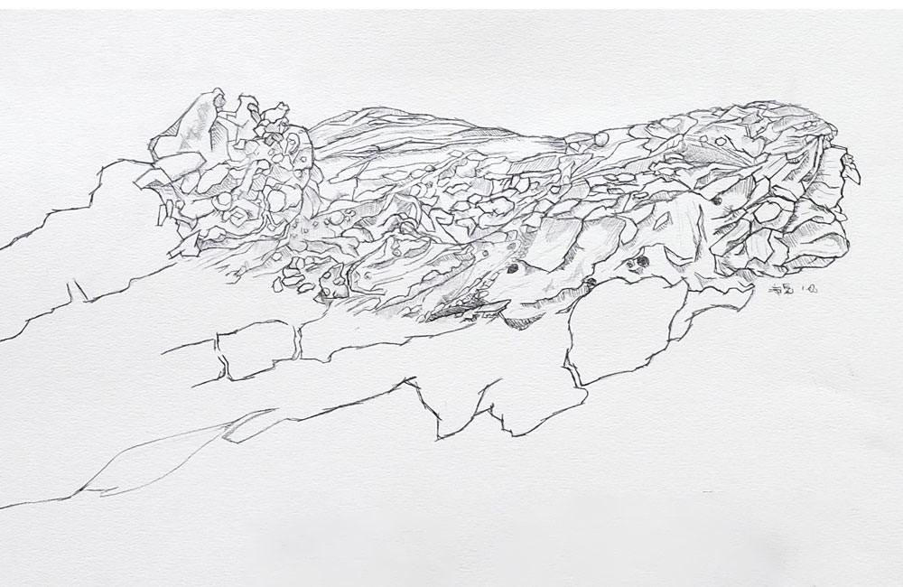 Bleistiftzeichnung. Detailstudie Rinde.