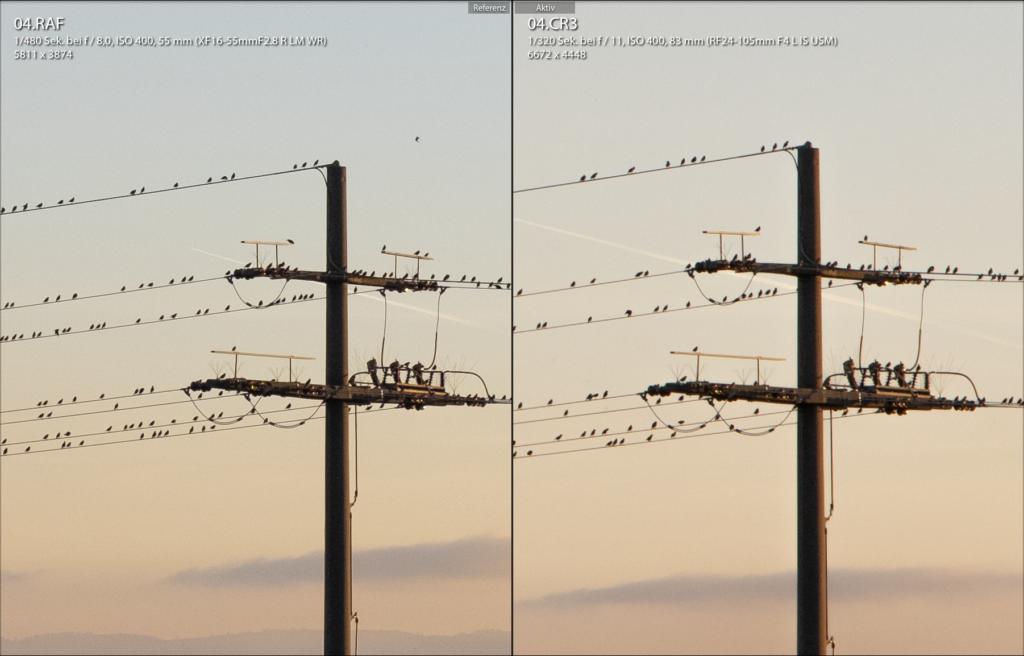Vögel auf einem Strommast