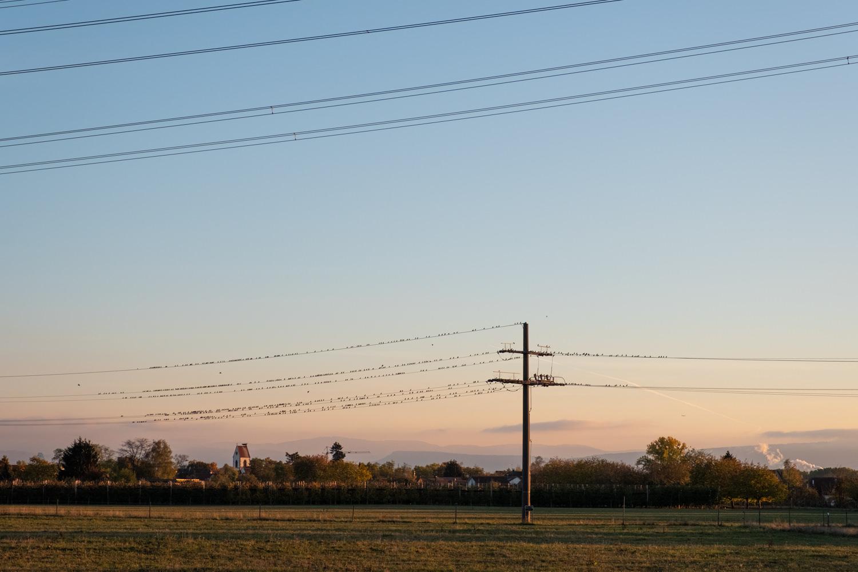 Wiese und Vögel auf einem Strommast